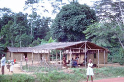 Voyage cameroun habitat foret