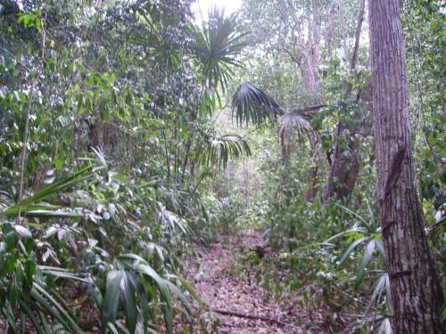 Chemins d'El Mirador ; expédition au cœur du monde maya (Voyage Guatemala) 3