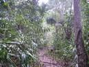 Chemins d'El Mirador ; expédition au cœur du monde maya (Voyage Guatemala) 1