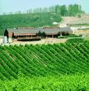 Les vins roumains : des vins à découvrir 2