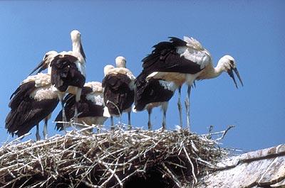 Parc naturel Lonjsko Polje : une réserve ornithologique unique en Croatie Centrale 2