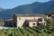 Cépages traditionnels du domaine Fiumicicoli à Sartène en Corse 1