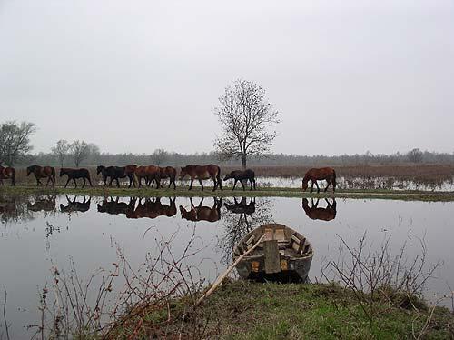Lonjsko Polje Croatie Centrale