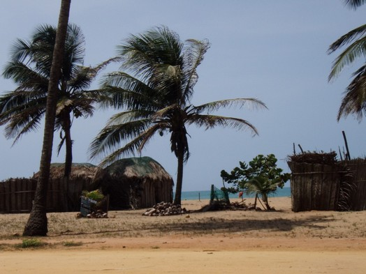 Jardin Helvetia : Sur la route des Pêches près de Cotonou ; le paradis sous les cocotiers 2