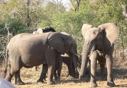 Circuit en Afrique du Sud : un pays plein de charme et attachant 4
