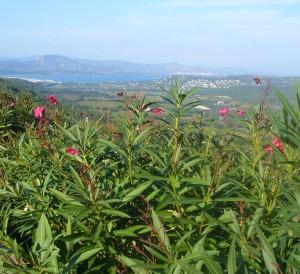 Gassin : l'un des plus beaux villages de France dans le Var 8
