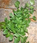 recette cuisine indienne sauce coriandre
