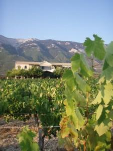 Vacances Grèce - Cephalonie : gite dans un domaine viticole Stella Vineyards 1