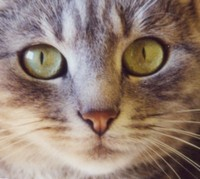 Le chat : un animal persécuté au cours des siècles - de l'Inquisition à la poubelle 1