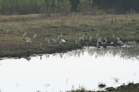 Comana, une réserve naturelle aux environs de Bucarest (Tourisme Roumanie) 10