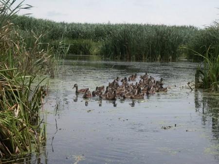 Comana, une réserve naturelle aux environs de Bucarest (Tourisme Roumanie) 6