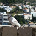 Neum ; la voie de la mer Adriatique de la Bosnie Herzégovine 33
