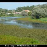 Cigoc Selo Roda, village des cigognes à Lonjsko Polje (Croatie Centrale) 4