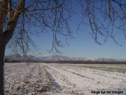 Tombe la neige sur les Vosges 7