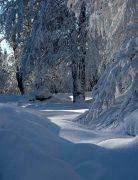 Tombe la neige sur les Vosges 5