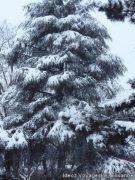 Tombe la neige sur les Vosges 9