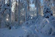 Tombe la neige sur les Vosges 2
