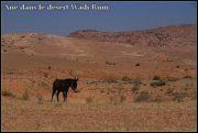 Quelques photos de Jordanie et de Petra 3