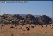 Quelques photos de Jordanie et de Petra 4