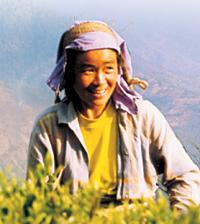 Thés du monde - Le Darjeeling : le prestigieux thé d'altitude himalayen 1
