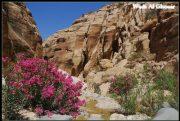 Quelques photos de Jordanie et de Petra 8