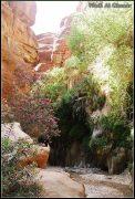 Quelques photos de Jordanie et de Petra 17