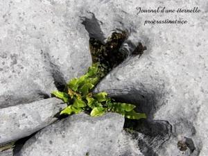 Dolmen Poulnabrone, Poll na Bron: Le creux de la meule (Irlande tourisme) 1