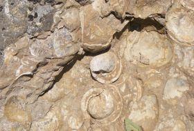 Carpates occidentales : pays de Moţi, Colline aux escargots et pierres vivantes 1