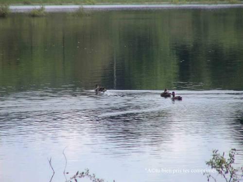 saint brisson lac morvan
