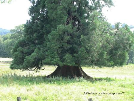 saint brisson morvan arbre