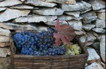 Agrotourisme Kalpic - Raisins