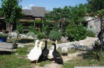 Agrotourisme à Krka en Croatie : logement à la ferme authentique et convivial près de Sibenik 1