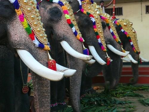 Vivre en Inde - Kochi ; La fête du temple à Cochin 1