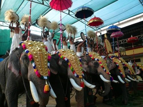 Cochin Kochi Elephants fete du temple