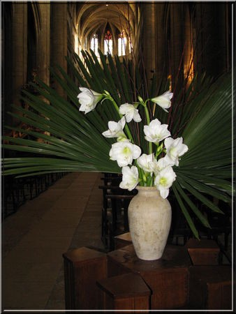 Cathedrale Auch orchidees