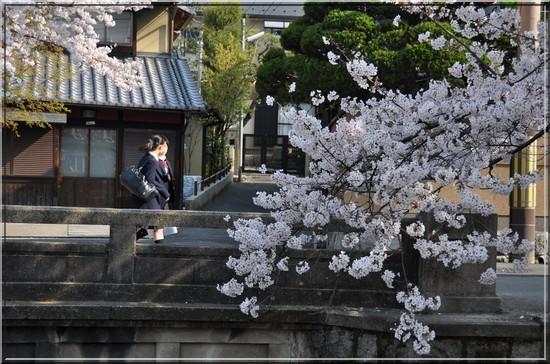 Kyoto Sakura japon
