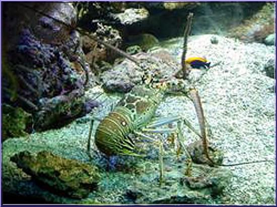 oceanopolis brest crustaces