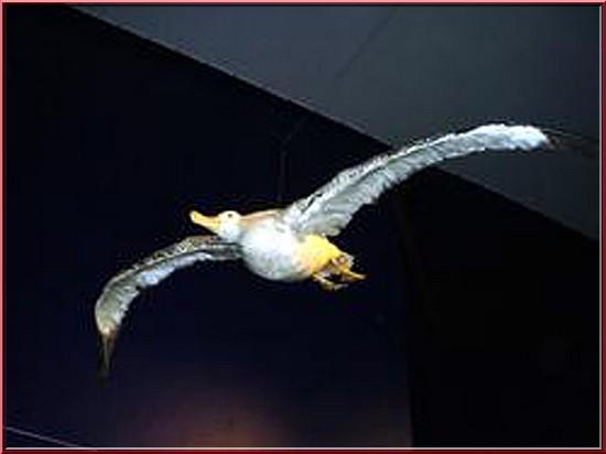 oceanopolis brest oiseau polaire