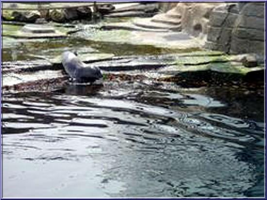oceanopolis brest phoques
