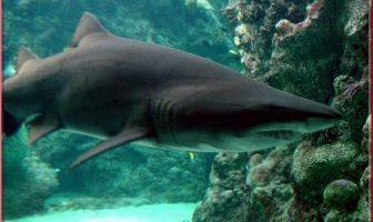 oceanopolis brest requin