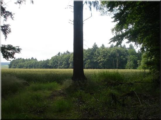 Luxembourg tronc d'arbre