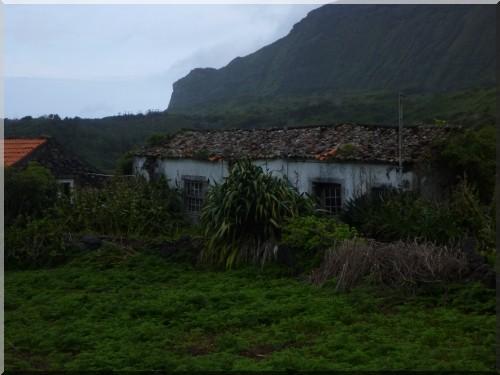 Flores maison abandonnee