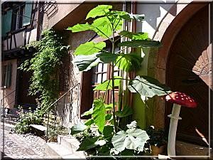 Ribeauville alsace une maison