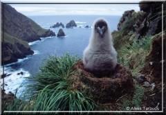oiseau des iles lointaines