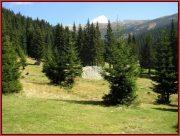 Le Parc National Retezat dans les Carpates ; la nature roumaine classée à l'UNESCO 38