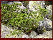 Le Parc National Retezat dans les Carpates ; la nature roumaine classée à l'UNESCO 13