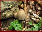 Le Parc National Retezat dans les Carpates ; la nature roumaine classée à l'UNESCO 11