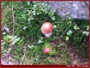 Le Parc National Retezat dans les Carpates ; la nature roumaine classée à l'UNESCO 33