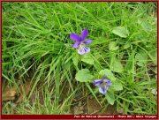 Le Parc National Retezat dans les Carpates ; la nature roumaine classée à l'UNESCO 6
