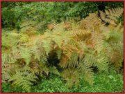 Le Parc National Retezat dans les Carpates ; la nature roumaine classée à l'UNESCO 40